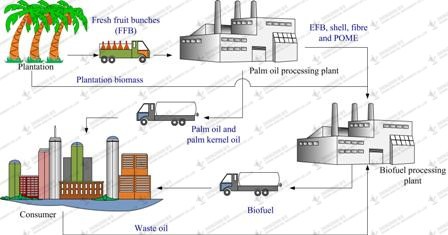 Palm oil production process